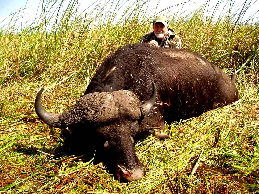 A number of Cape Buffalo were hunted during the course of the season, some bigger than John Nowlin's, which he hunted with us in Mozambique. But John's history with Cape Buffalo and the sure tenacity of his bull not wanting to quit, very similar to John's previous bull, saw him walk away with Cape Buffalo of the season. We just love those solid bosses forming a helmet on top of its head.