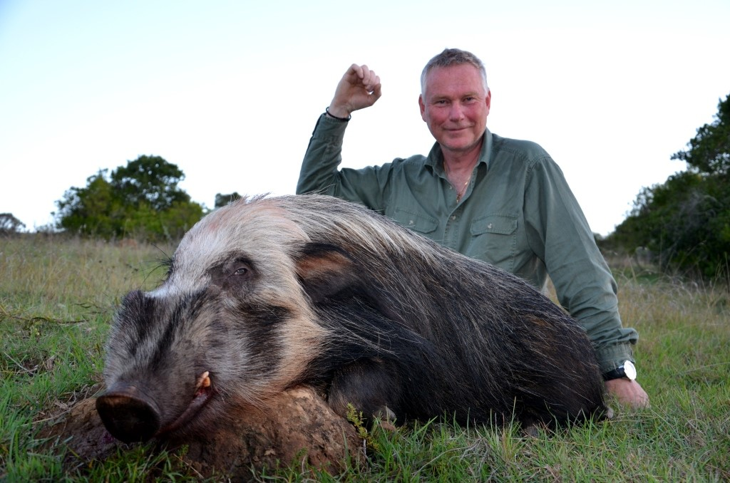 A Bushpig - yes a Bushpig! Bjorn didn't know what it was, neither did he want to hunt one. He soon realized there would be no convincing of his PH, Greg Hayes. When you see a big Bushpig boar in day light - you take it!