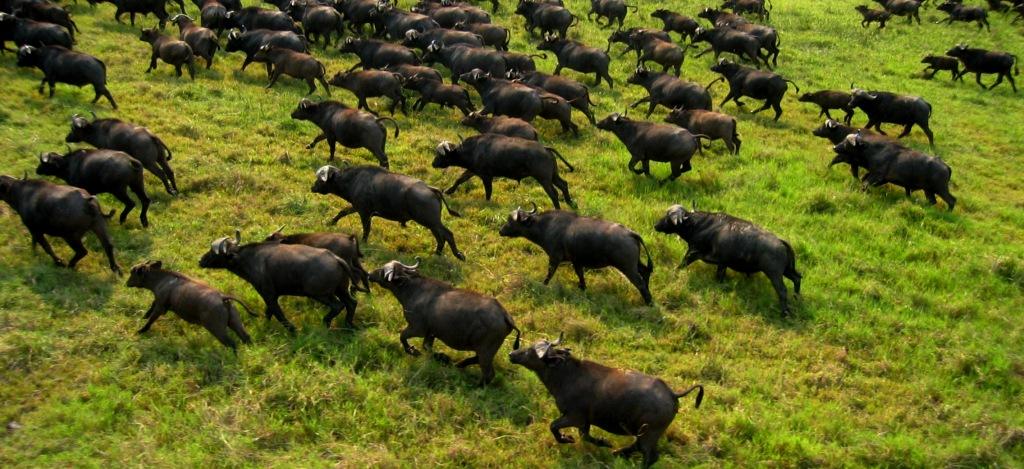 Hunt Africa