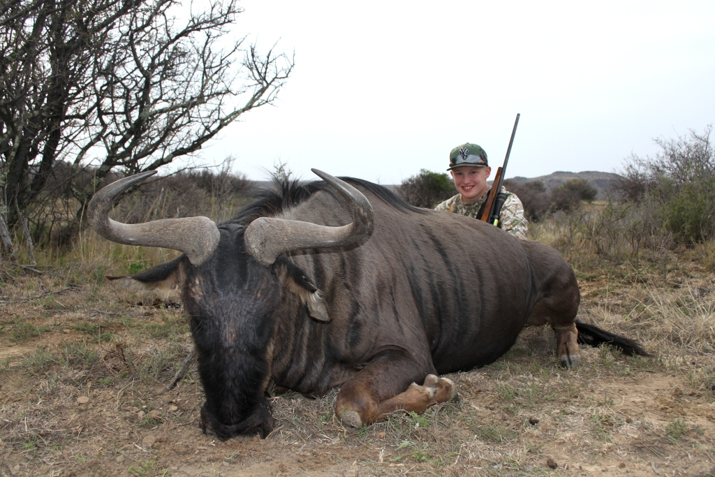 We had spotted a big Blue Wildebeest from a distance and dully started a long and patient stalk. Soon we were within shooting distance...And Justin let him have it.