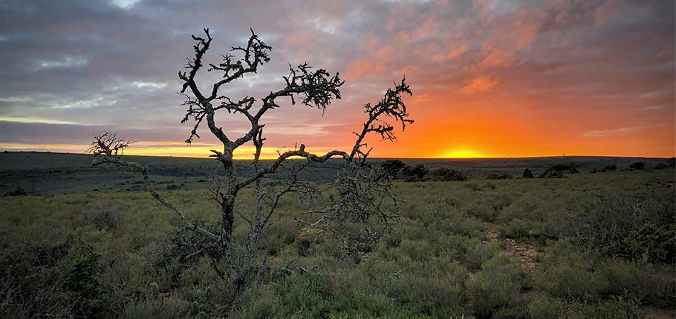 John X Safaris African Plain Hunting
