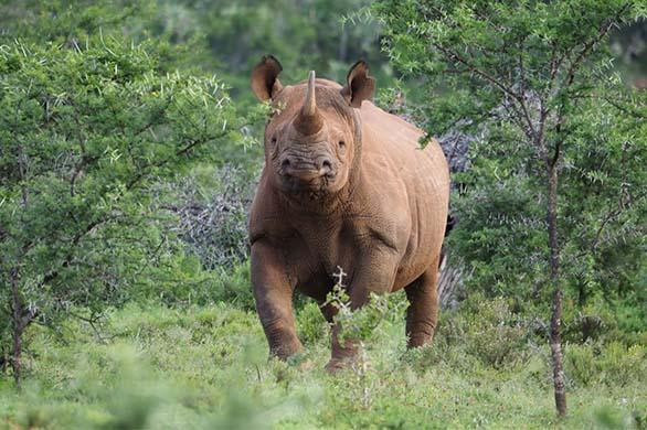 John X Safaris Conservation Causes